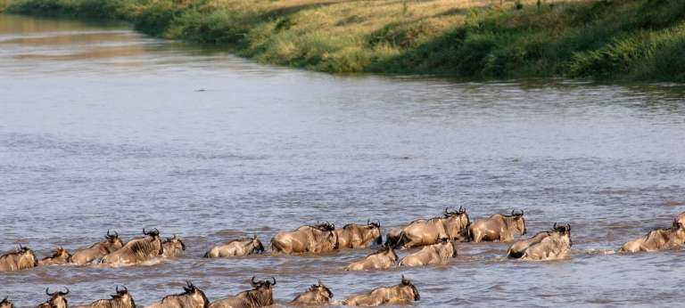 2019 Tanzania August to October Great Migration safari (Best for budget)