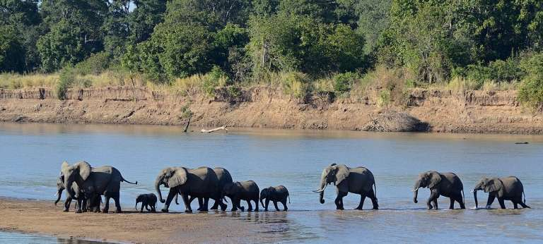 Luangwa River Camp, South Luangwa National Park, Zambia - African Wildlife Safaris