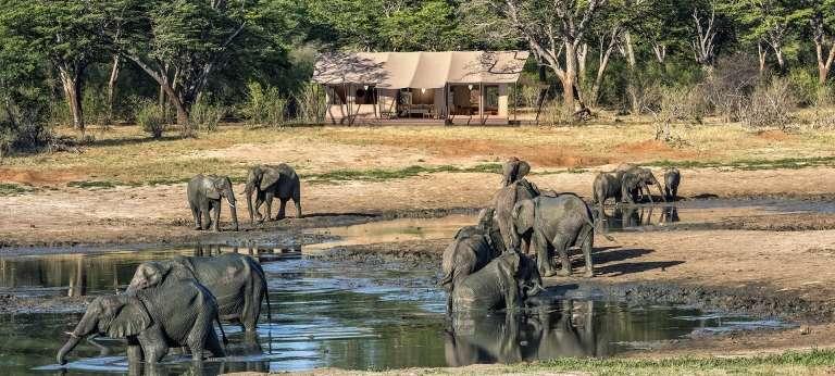 10-day wild Botswana and Zimbabwe safari