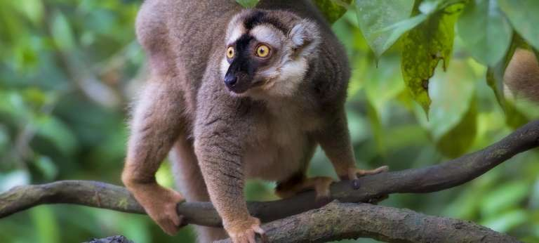 Tropical East Madagascar Tour (11 days)