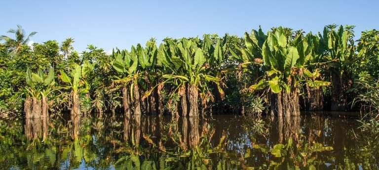Tropical East Madagascar Tour (11 days)