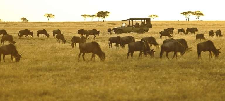 Wildebeest Migration, Ngorongoro & Zanzibar Journey (12 days)