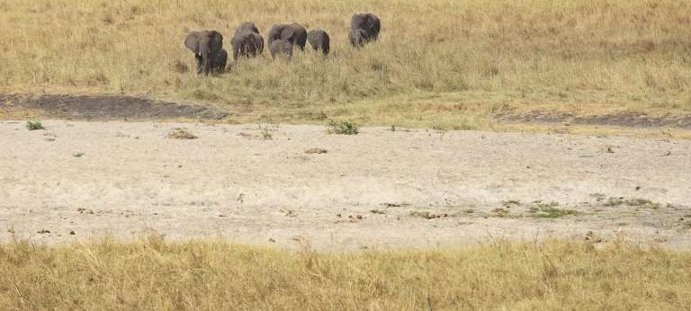 Wildebeest Migration, Ngorongoro & Zanzibar Journey (12 days)