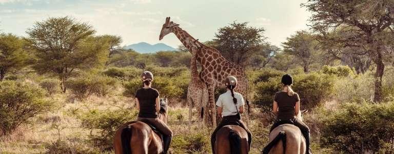Kambaku Safari Lodge - Africa Wildlife Safaris