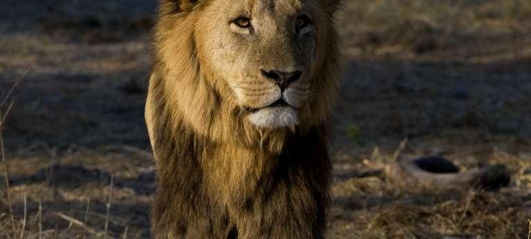 Big Five safari combining Moremi Game Reserve and Selinda Reserve