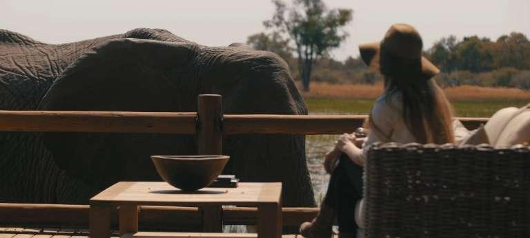 Safari in Vic Falls, Chobe & Okavango Delta