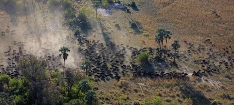 Aerial View of Wildlife at Zarafa Camp