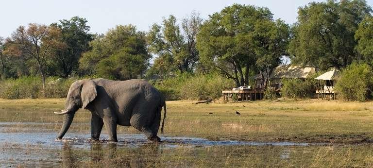 Best of the Okavango Delta Safari (6 days)