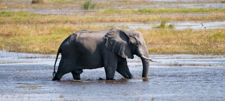 Elephant Wading Through River at Zarafa Camp