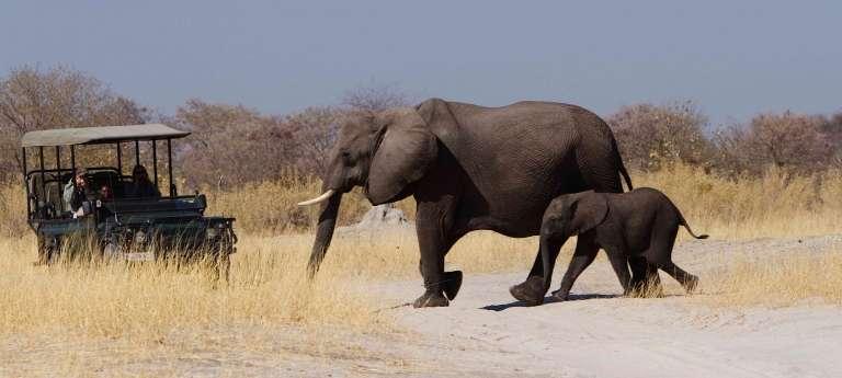 Okavango Delta Elephant in Botswana