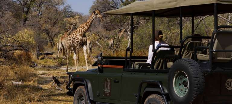 Giraffe spotted at Game Drive