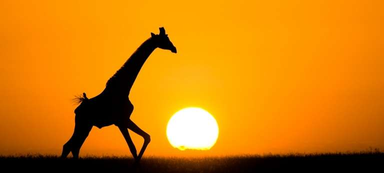 ol Donyo Lodge Giraffe in Kenya