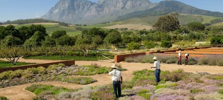 Babylonstoren plantation, Franschhoek, South Africa