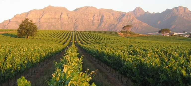 Klein Zalze Vineyards in Stellenbosch, South Africa