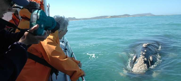Guests Whale Watching in Gansbaai, South Africa
