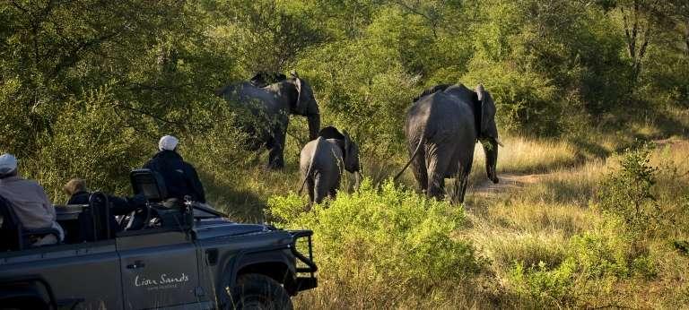 Kruger, Cape Town and Mauritius Bush & Beach Safari (15 days)