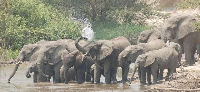 Ishasha Wilderness Camp Elephants in Uganda