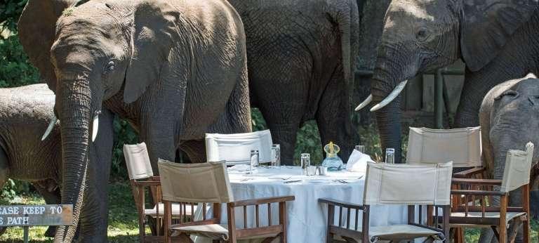 Wilderness safari in Kenya, Zambia and Zimbabwe (10 days)