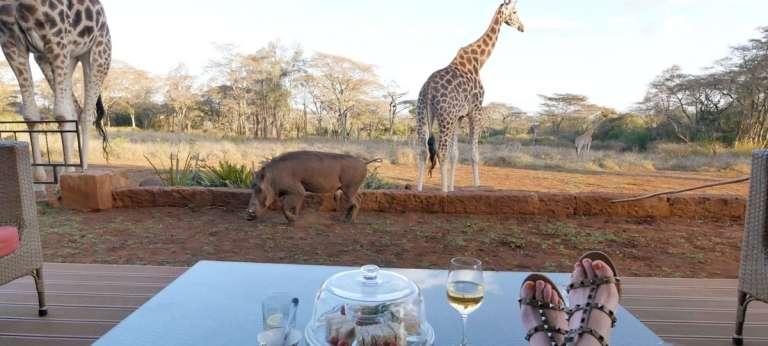 Special Five Safari in Kenya's Samburu (8 days)
