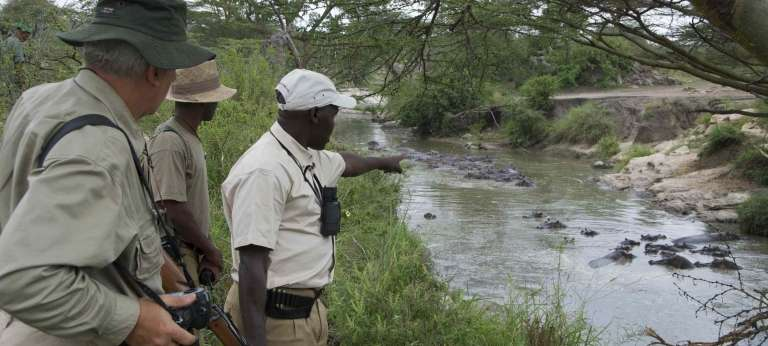 Migration Camp watching Hippos at Game Drive in Tanzania