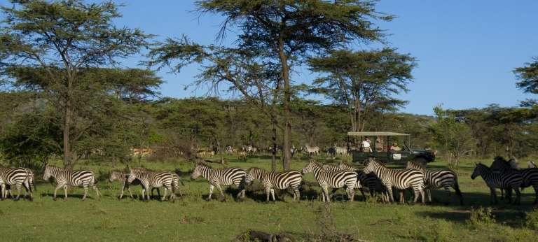 Big Cats of East Africa (EA 10 days)