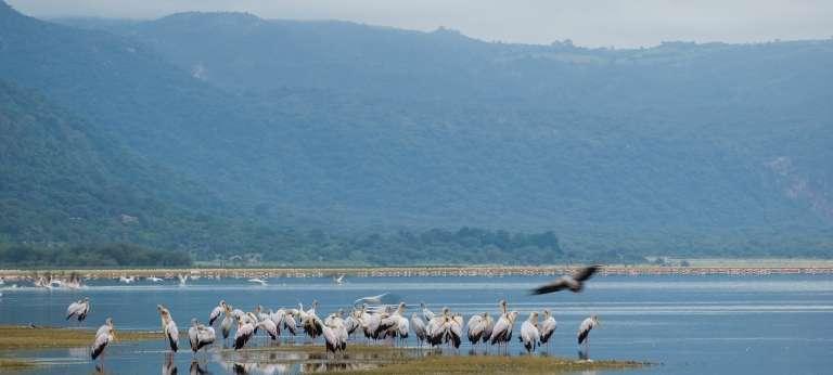 Bird Life in Lake Manyara, Tanzania