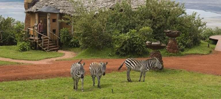 Zebras at Ngorongoro Crater Lodge, Ngorongoro Crater, Tanzania