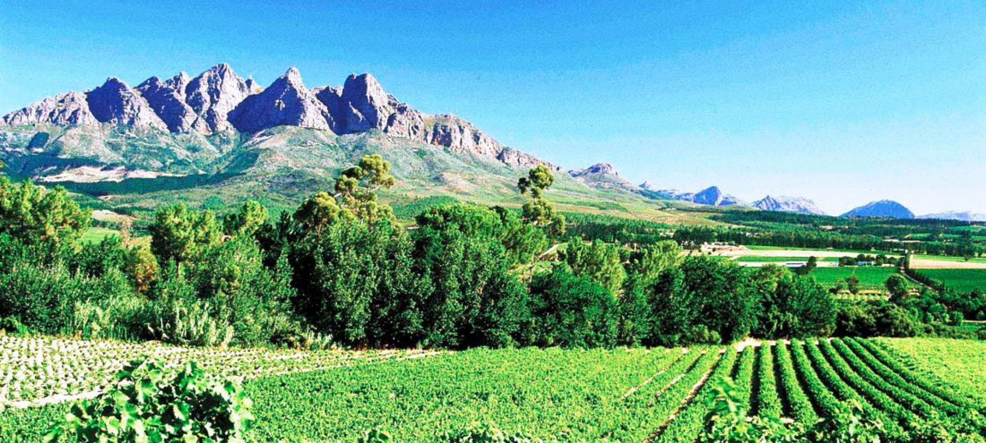 Charge your camera's batteries - the winelands offer incredible views and the best wines.