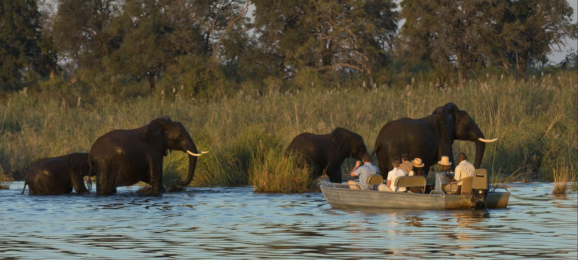 Early morning boat trips down or up the Zambezi river will offer unique views of the wading wildlife