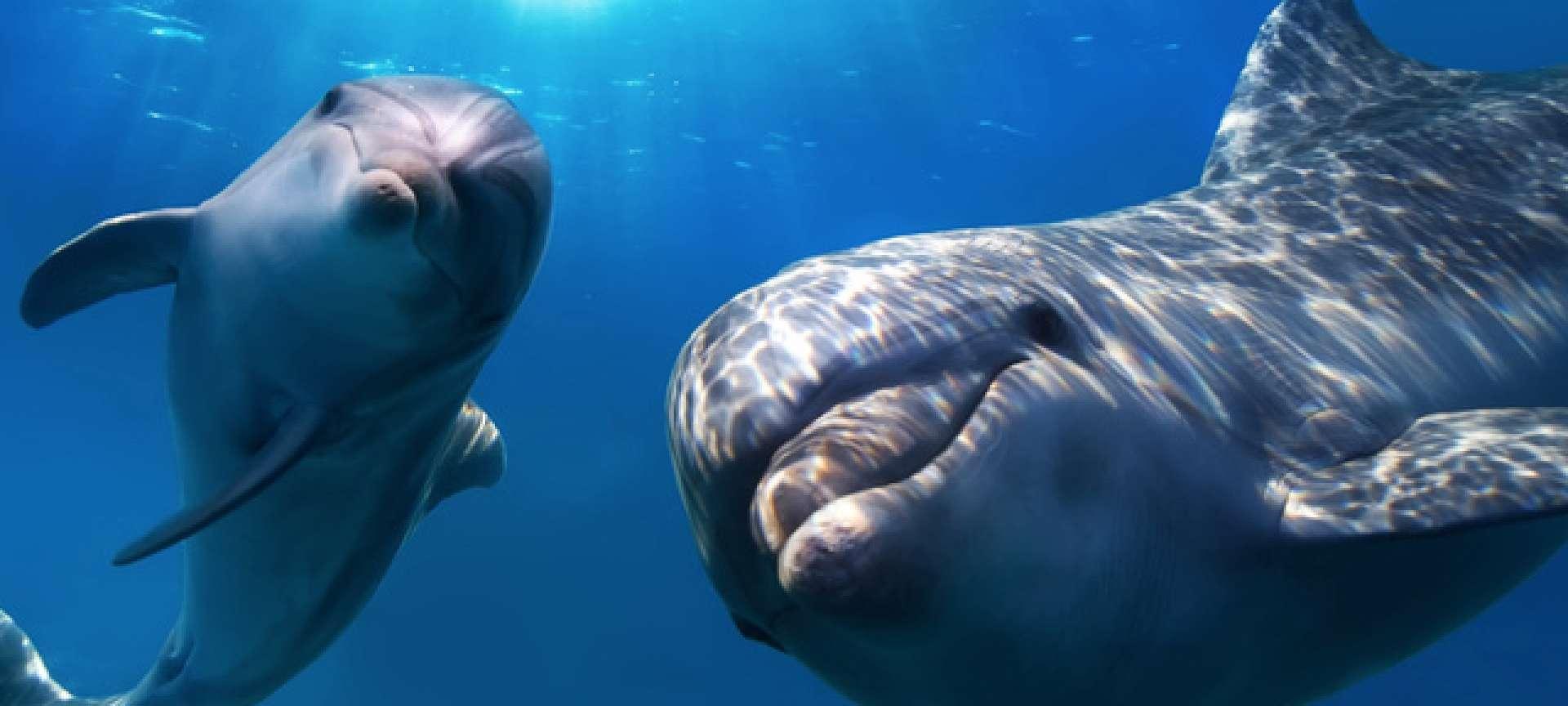 Dolphin excusions are a major drawcard in Kizimkazi