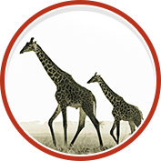 Discover Africa Migration Safaris