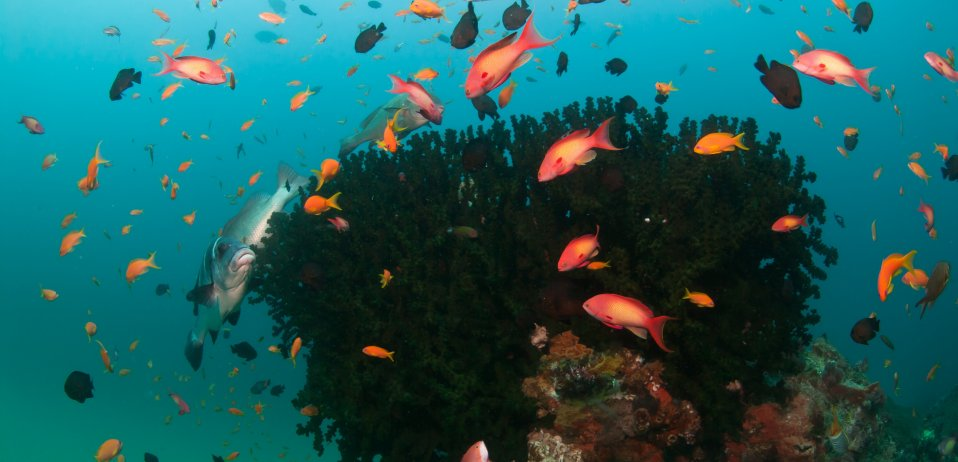 Aliwal shoal sodwana bay best snorkeling beaches in the world south africa safari coral reef