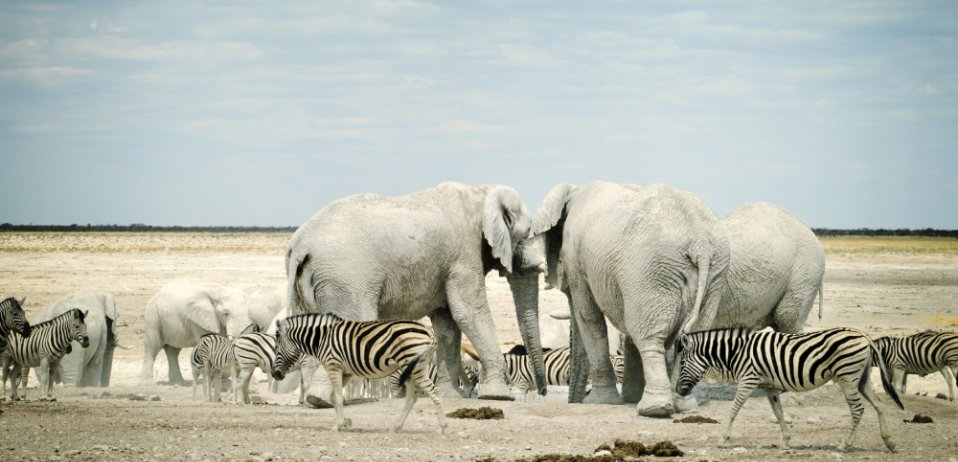 things to do in namibia etosha national park wildlife