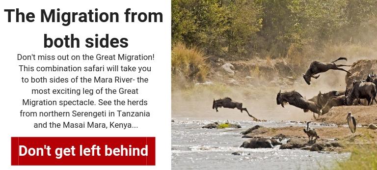 kenya-private-safari