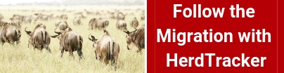 follow-migration-in-guided-game-drive