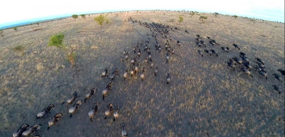 drone footage great migration