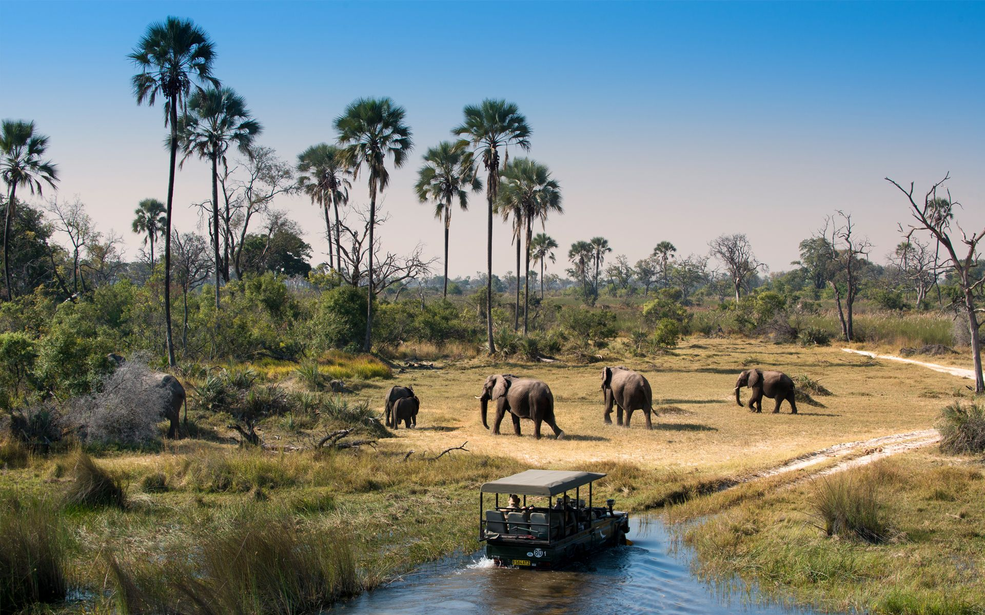 Elephant are abundant throughout Botswana