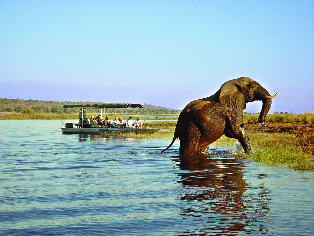 Comb Ducks on Lake, Savute Chobe National Park, Botswana загрузить