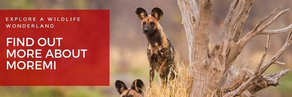 moremi game reserve okavango delta botsana safari