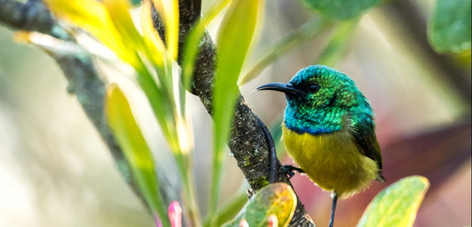 Birding tours south africa collared sunbird in the kruger national park