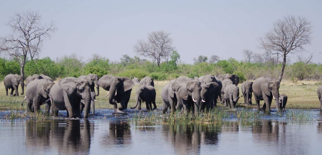 The mighty Chobe river is a wildlife magnet - especially in the dry season when water is scarce