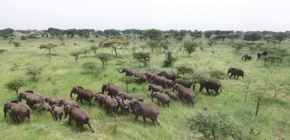 kruger national park safari south africa drone above elephant herds
