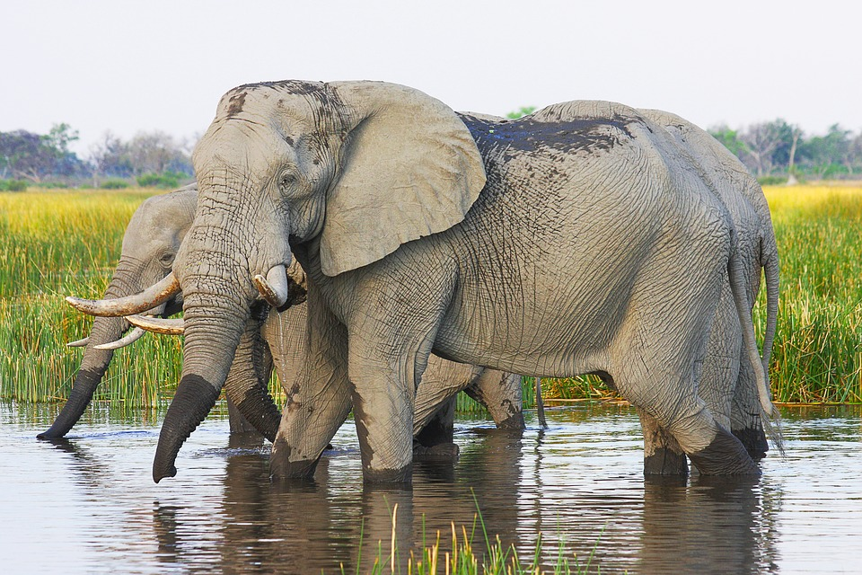512b9507ea8 Seven questions you may have about a Botswana safari