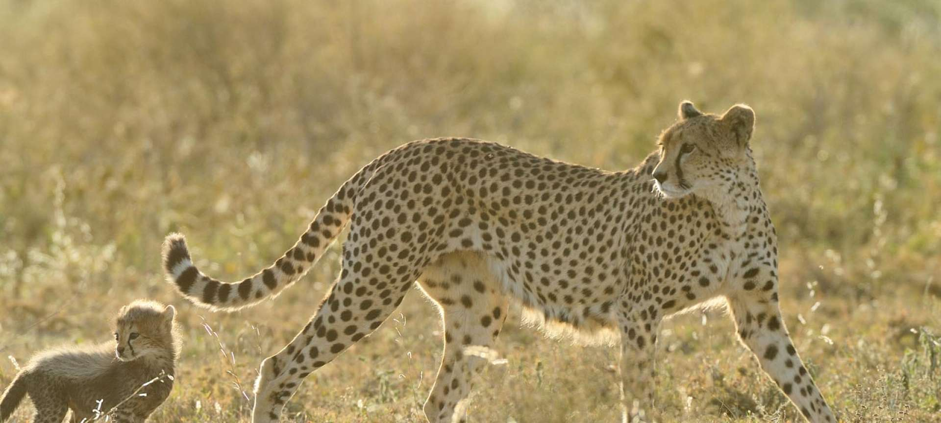 serengeti-wildlife-photography