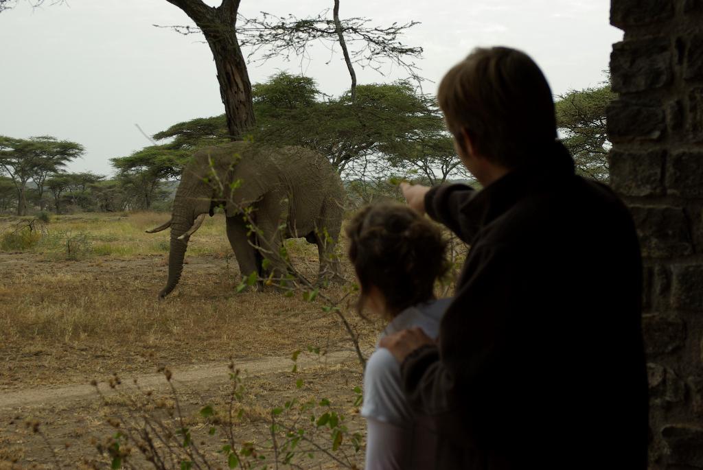 affordable-serengeti-safari