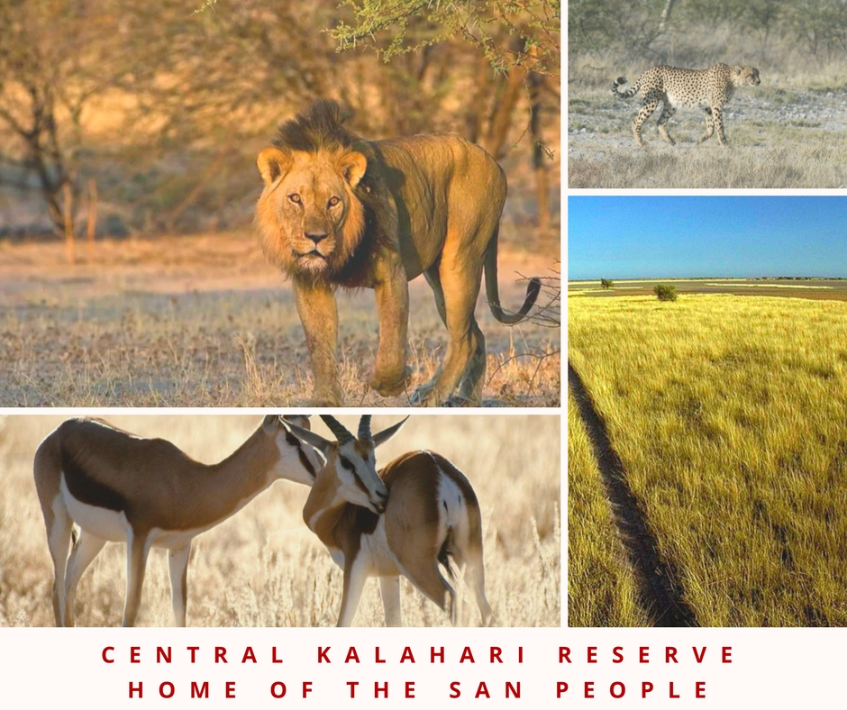 botswana game reserves central kalahari safari