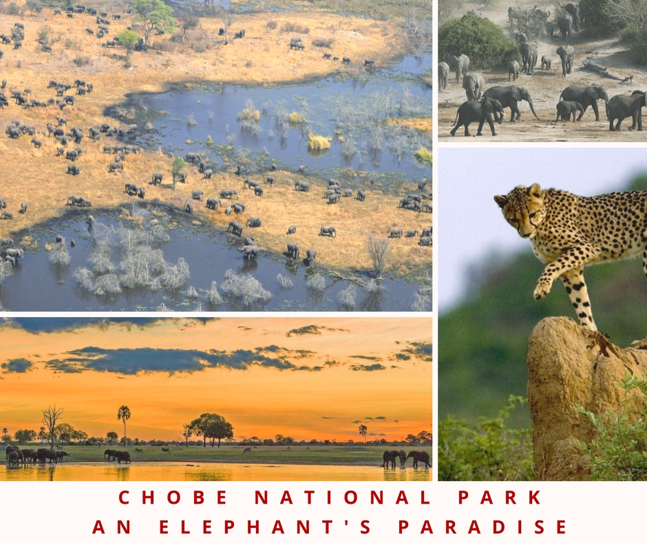 botswana gam reserves chobe national park safari