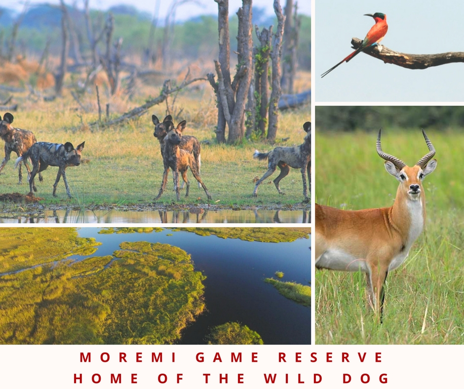 botswana game reserves moremi safari