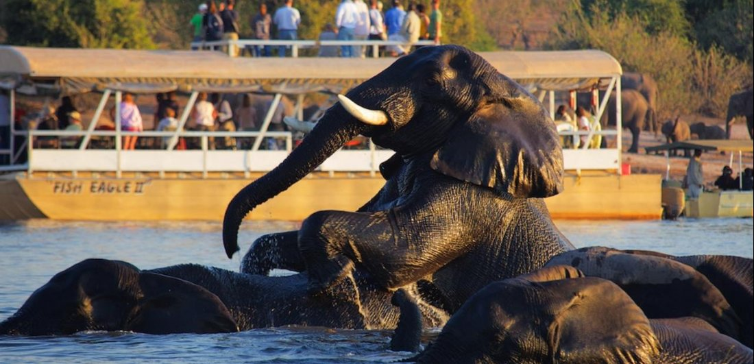 chobe river botswana safari private boating elephant