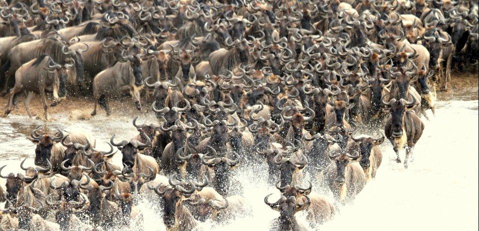 Camp zebra serengeti migration tanzania safari wildebeest river crossings